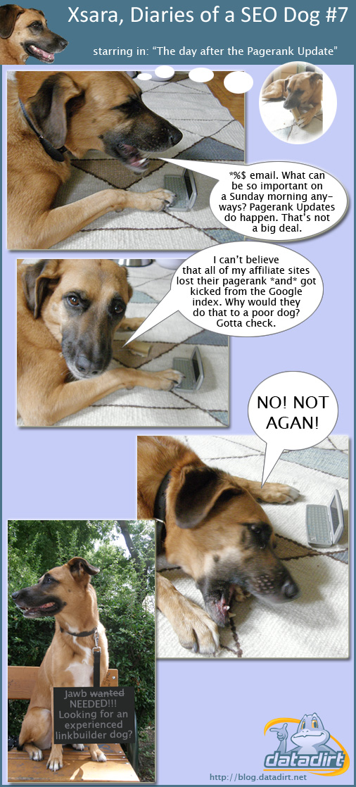 Xsara, diaries of a SEO dog #7