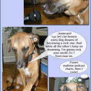 Xsara, Diaries of a SEO Dog #9