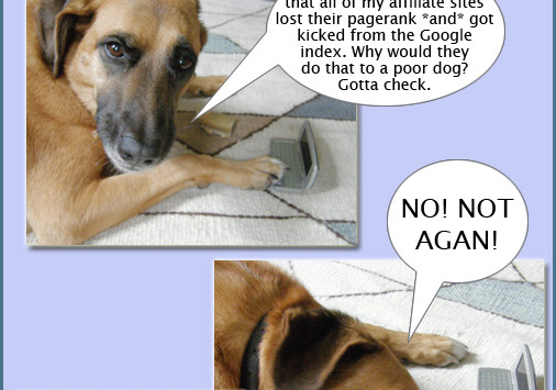 Xsara, SEO dog #7: Der Tag nach dem Pagerank Update