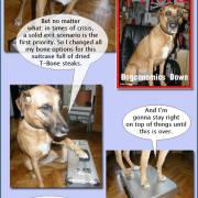 Xsara, Diaries of a SEO Dog #8