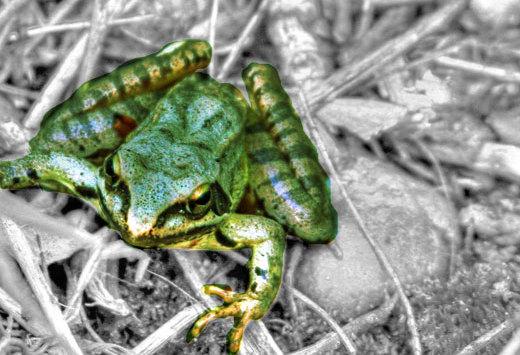 Fotos: Die Suche nach dem Frosch