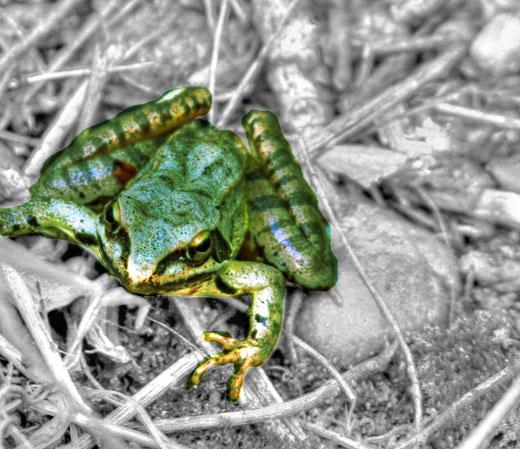 froggie1