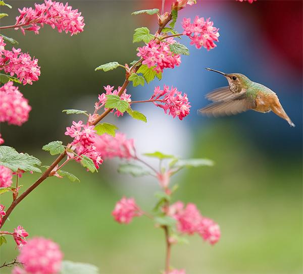 picweekbird