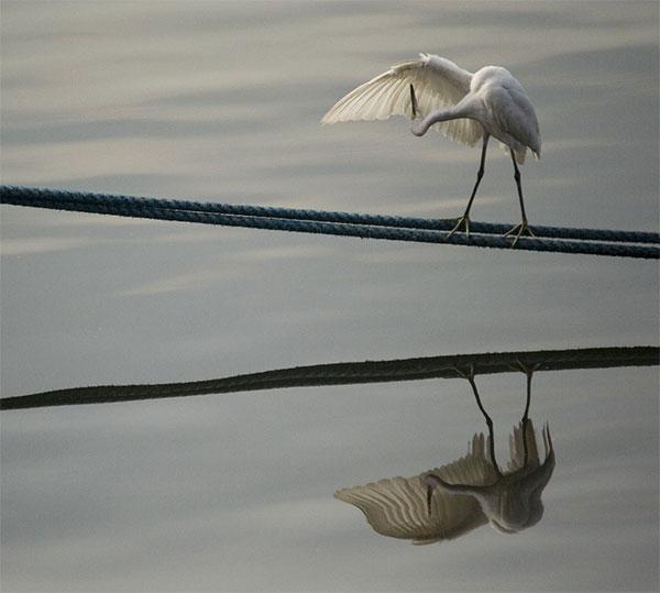 vogel-klein