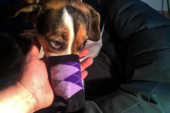 Pula hat die Socke auf.