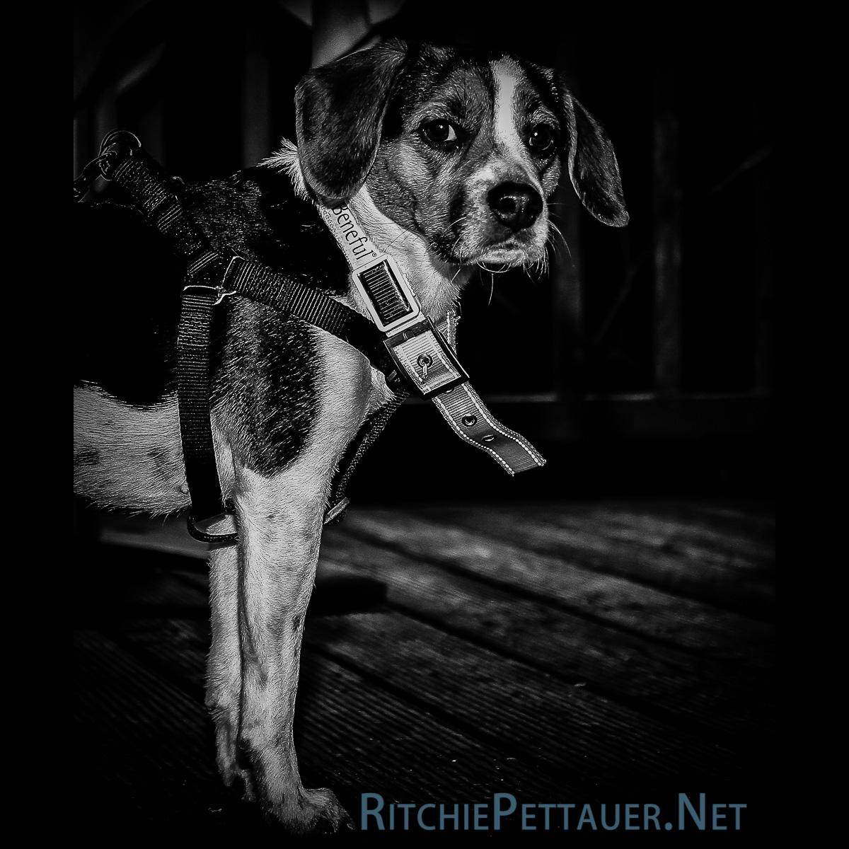 Wenn Hunde mit Leuchtbändern über die Wiener Ringstraße flanieren