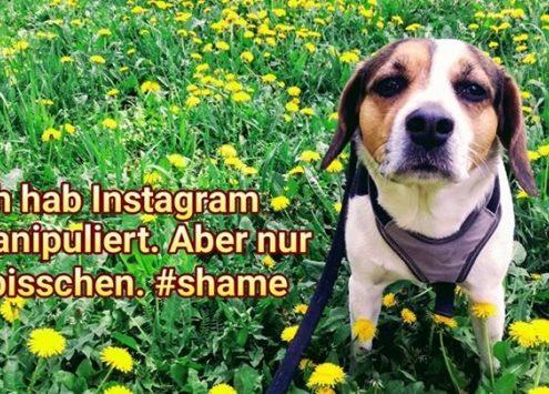 Der dümmste Instagrammer erntet die dicksten Fake-Likes