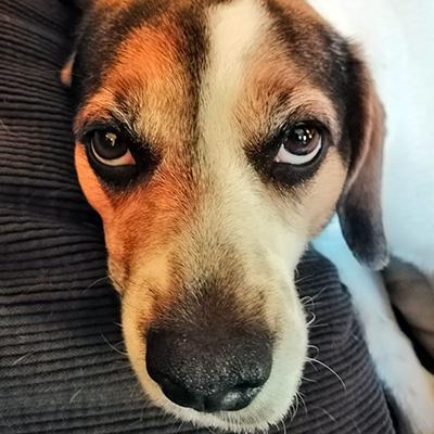 Blog Dog Pula